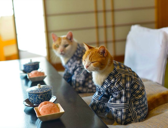 japan_guide_cats_25